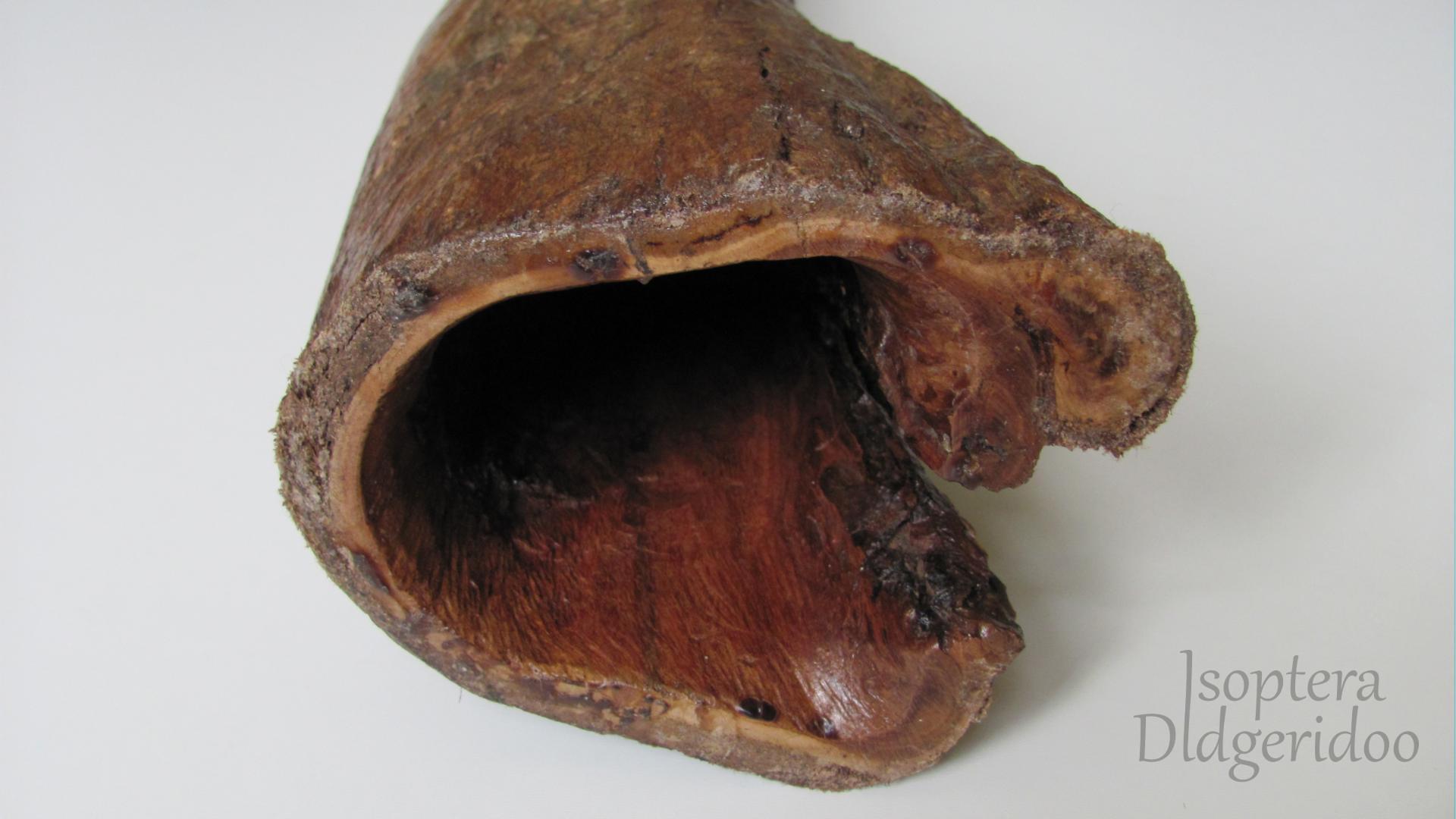 Boxwood Eucalyptus didgeridoo tölcsér ID-01B